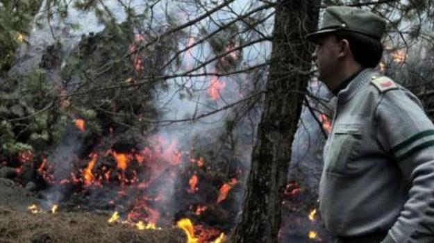 Incendio a Monte Kronio, Agrigento, Cronaca