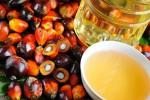 Snack con olio di palma, studio: non sempre contengono più grassi saturi