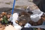 Sant'Erasmo, volontari ripuliscono il porticciolo