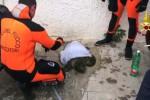 Salvata al Foro Italico di Palermo una tartaruga Caretta caretta