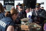 Palermo, blitz al mercato di Ballarò: sequestrati 150 cardellini
