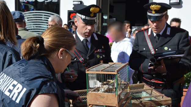 carabinieri, cardellini, Palermo, Cronaca