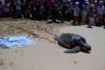 """Torna in mare """"Vito"""", tartaruga curata alle Egadi"""