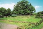 Il Castagno dell'Etna eletto a simbolo dalle guide ambientali