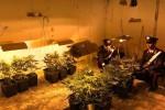 Serra di marijuana sotterranea allo Zen, la piantagione in un cunicolo: le immagini