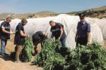 Seicento chili di droga tra cantalupi e zucchine, un arresto a Licata