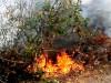 Ribera, scoperto il cadavere di un 68enne: stava pulendo l'uliveto vicino ad un incendio di sterpaglie