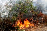 Ancora roghi nel Palermitano, fiamme a Piano Stoppa: canadair in azione