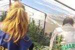 Partinico, trovate 100 piante di canapa vicino alla casa di un anziano