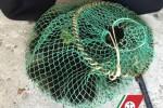 Sequestro di ricci di mare a Porto Empedocle
