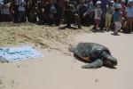 Favignana, in attività il pronto soccorso delle tartarughe