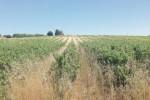 Rischiano il degrado i terreni confiscati in provincia di Trapani