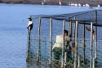 Situazione critica nella Laguna Orbetello per il caldo