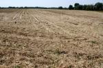 Siccità:Sos nel Lazio,costretti a irrigare vigneti e uliveti