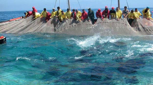 Capo Boeo, marinerie marsala, quota tonno marsala, Trapani, Cronaca