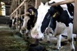 Dal governo 15 milioni agli allevatori, superato taglio Stato-Regioni