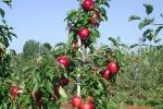 Agricoltura: 26 milioni di euro Agea per lo sviluppo rurale
