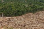 Norvegia a Brasile,stop deforestazione Amazzonia o no fondi