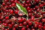 Antiche varieta' di ciliegie (foto Archivio SlowFood)