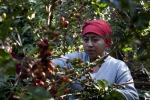 Il clima minaccia la produzione di caffè in Etiopia