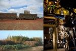 Ateneo Bologna guida progetto Europa-Brasile biocarburanti