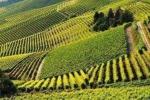 Cresce enoturismo nelle Città del Vino, vale 2,5 miliardi