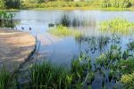 L'elettronica flessibile si ispira alle piante acquatiche (fonte: Cultivar 413, Flickr)