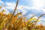 Un'analisi statistica indica per la prima volta che le estati calde e aride sono destinate a diventare molto più frequenti (fonte: RemazteredStudio,Pixabay)
