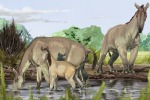 Ricostruito il Dna degli 'strani animali' di Darwin (fonte: Jorge Blanco)