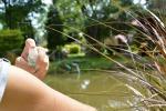 Oms,a rischio 80% popolazione mondo per malattie da insetto