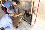 Canile abusivo allo Zen, nelle gabbie 22 cuccioli - Le immagini della liberazione
