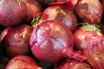 Ricche di antiossidanti, cipolle rosse arma contro il cancro