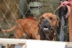 Cani chiusi in 2 box a Trapani, proprietario denunciato