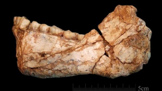 Homo sapiens, Sicilia, Vita