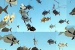 """Sospesi in un vicolo di Ortigia, a Siracusa i pesci """"mobiles"""" di Puccetti"""