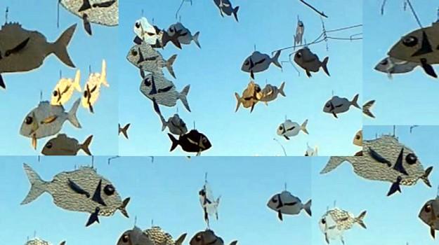 installazione, pesci, Siracusa, Cultura