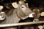 Asp di Enna, riparte la battaglia contro le malattie negli allevamenti