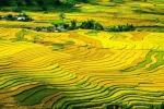 Le risaie sui terrazzamenti di Bali ricordano le geometrie naturali dei frattali