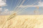 Cerealia, festival cultura alimentare parla di Med ed Europa