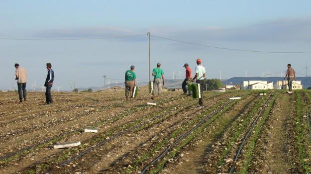 sfruttamento nelle campagne, Ragusa, Cronaca