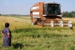 Cdm approva riforma mercato interno del riso