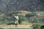 Un'invasione di locuste in Etiopia (fonte:FAO/ G. Tortoli)