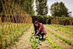 Adotta un orto biologico, sharing economy arriva in campagna