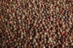 Zuppa lenticchie Castelluccio ricetta simbolo agricoltori Ue