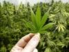 Ad Agrigento un convegno dedicato alla cannabis terapeutica