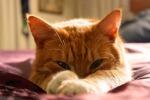 I gatti signori del mondo, il loro 'impero' ha 9000 anni