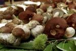 Coldiretti,annata nera per funghi,porcini su a 35 euro chilo