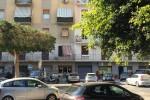 Potature ficus a Palermo, la Lipu al Comune: fermate i lavori, nidi a rischio