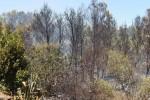 Diminuiti nel 2017 gli incendi nei boschi dell'Agrigentino