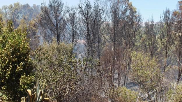Incendi nell'Agrigentino, Agrigento, Cronaca